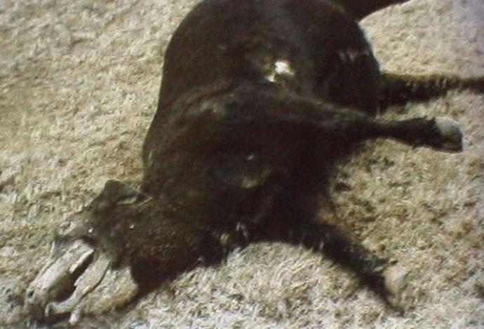 alien harvest animal cattle mutilation